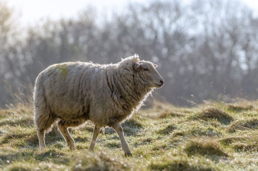 Farmers are encouraging UK industries to embrace British wool and become more sustainable