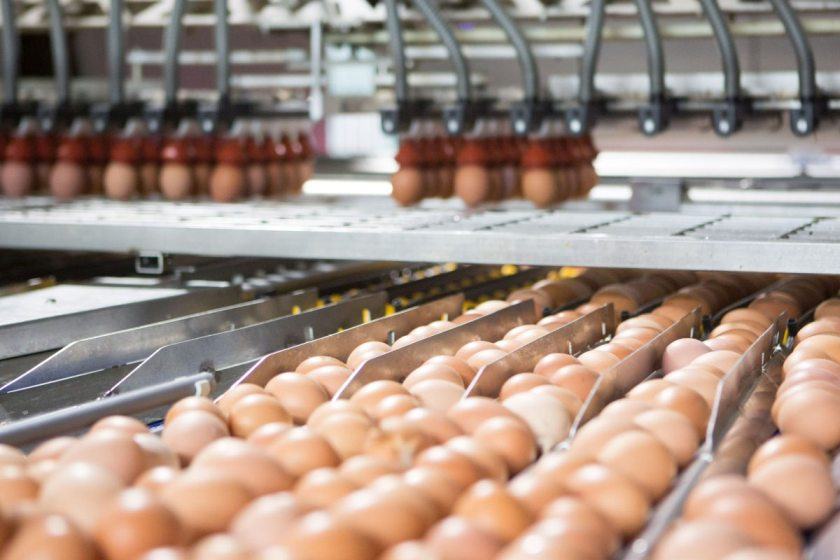 Free range egg producers fear further sector expansion may reduce profitability even further