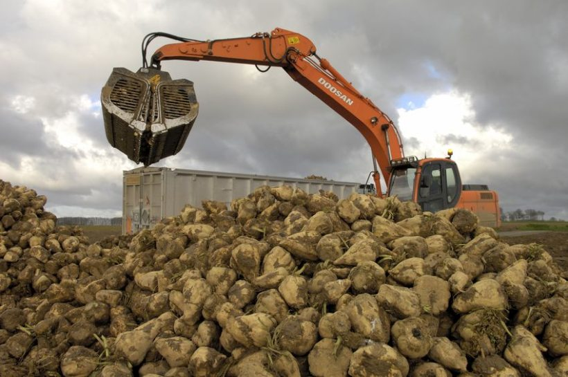 The government's plan threatens the viability of a British success story, NFU Sugar says