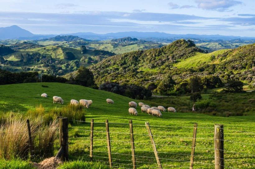 New Zealand's sheep and beef farms have nearly reached carbon neutral, according to new research