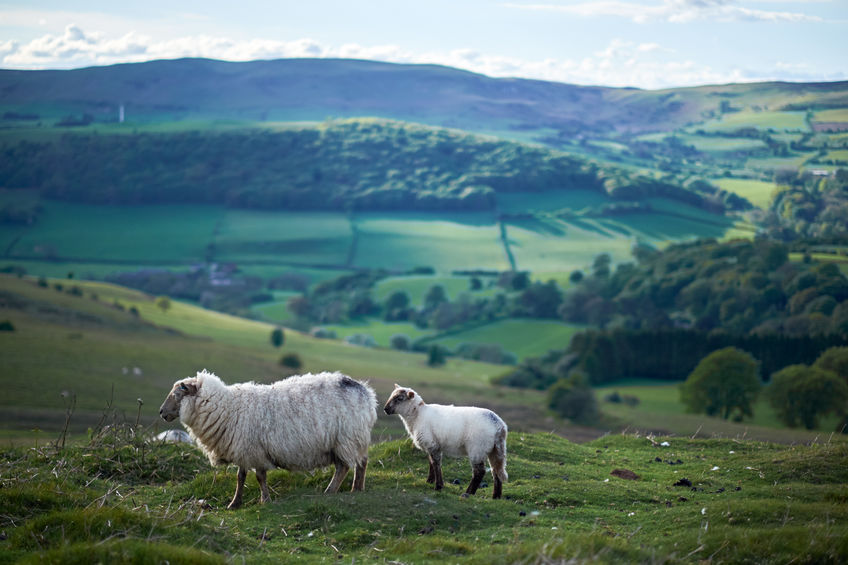The report showcases the role farming plays in maintaining the nation's iconic landscapes