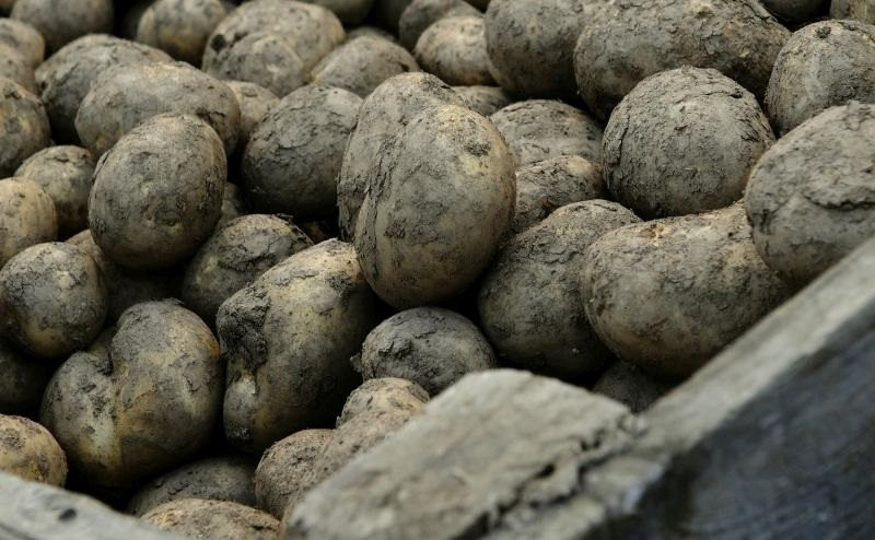 According to figures, the EU remains a key importer of UK potato exports