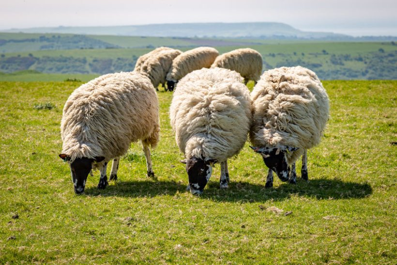 The UK's reductions in livestock antibiotic use over the past six years means it is among the lowest users overall