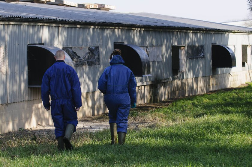 Highly pathogenic avian influenza has been discovered in both countries this week