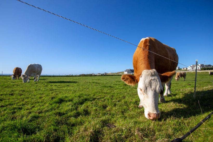 An application to register 'Irish Grass Fed Beef' a special EU designation must include NI, farmers say