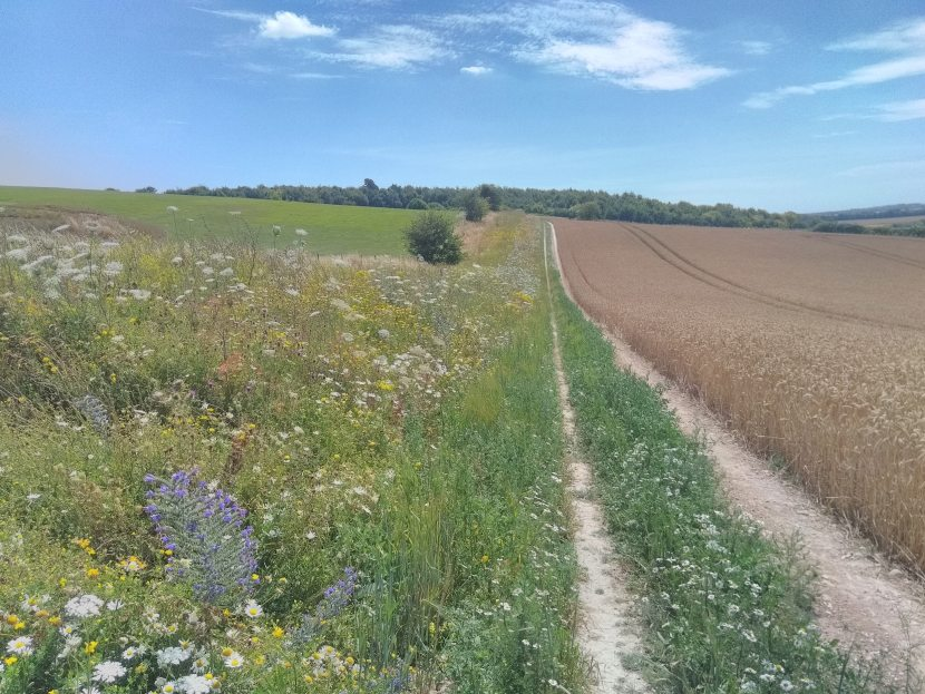 The new habitat represents a 50% increase in pollinator habitat and includes arable reversions