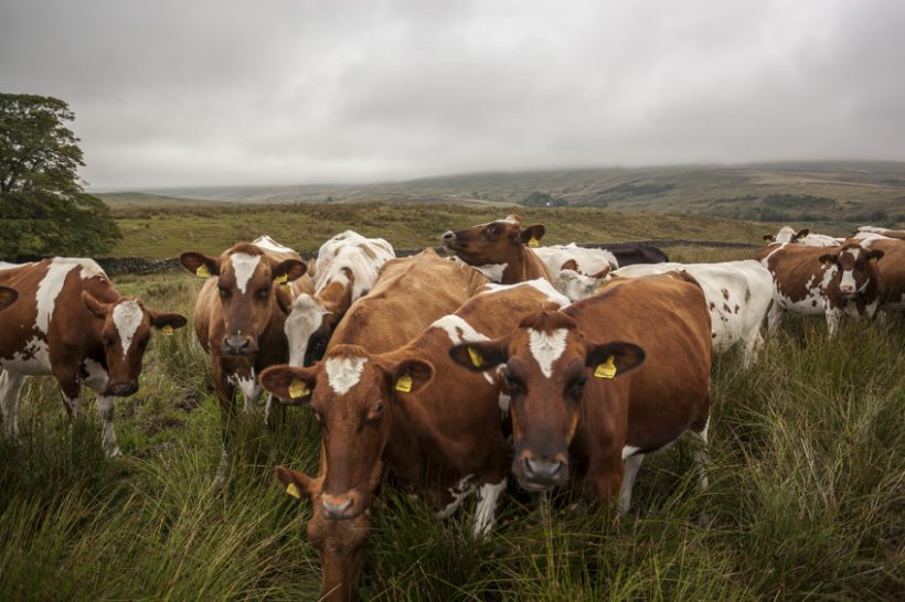 Exporters will need to ensure livestock are identified with the correct ISO country code