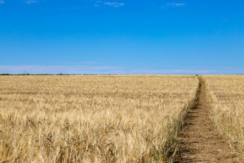 Maps for fields will be created that shows farmers the potential yield and grain quality variation