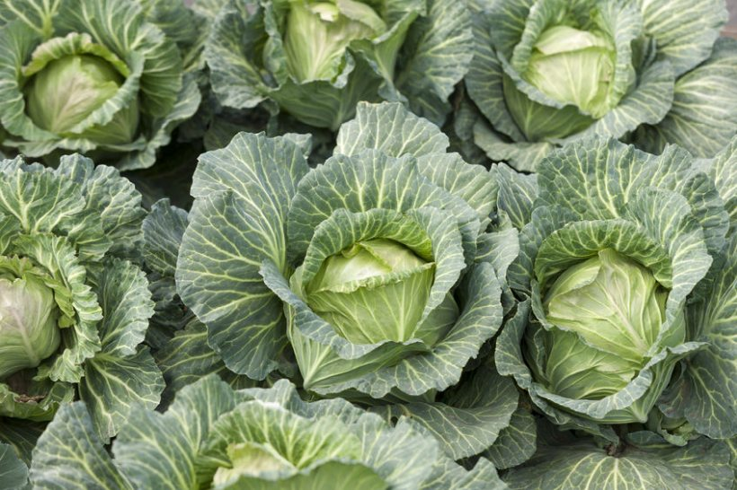 The UK is highly reliant on fruit and vegetable imports, currently importing 65% of its total supply