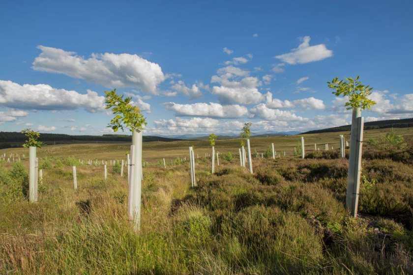Defra says agroforestry schemes will help with the government's tree planting target (Photo: Scottish Forestry)