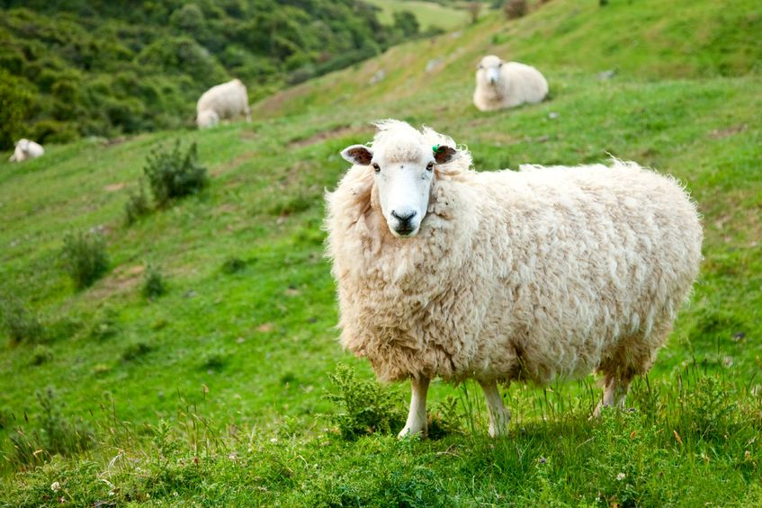 Farmers are being encouraged to 'donate a sheep' to raise charity funds