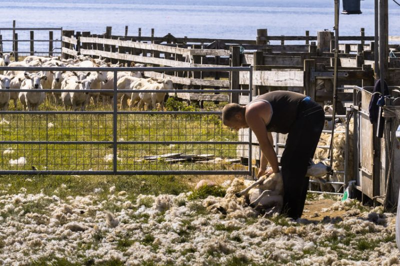 The grant scheme will provide support for farmers and crofters to purchase specific equipment