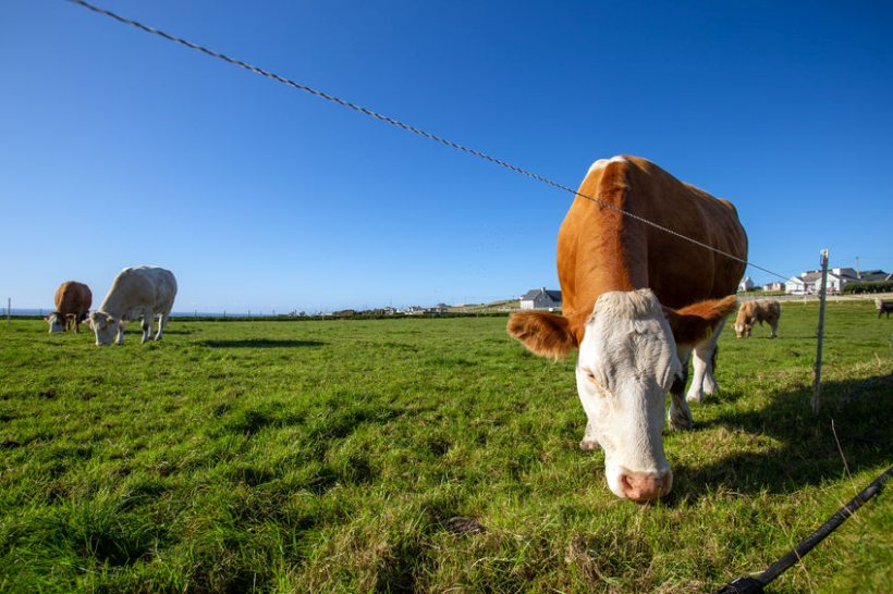 The new network will include a range of dairy, beef and sheep systems