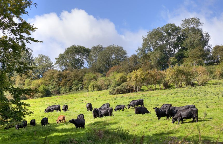 Emissions from UK beef are half that of the world average, the NFU points out