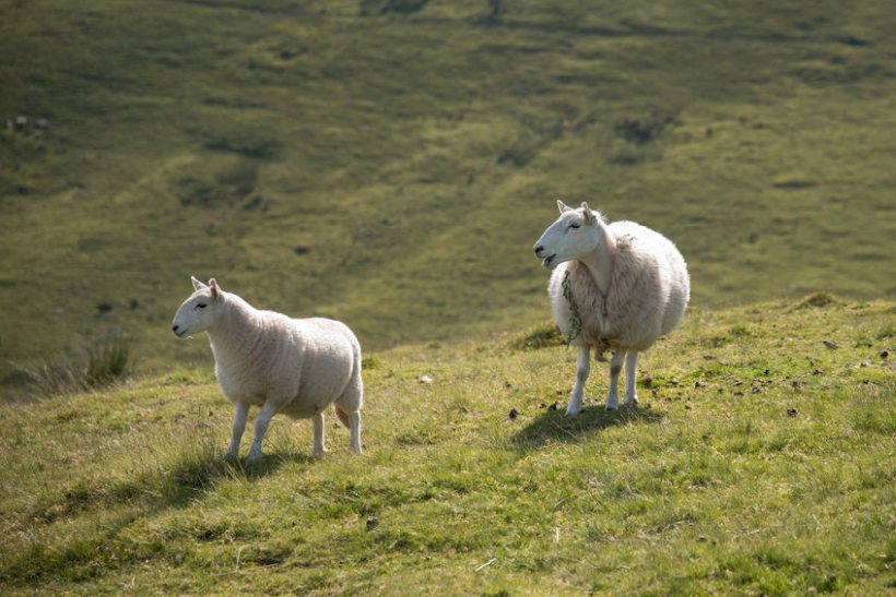Farmers have welcomed news that £219.3m has been paid in the first week of the payment window