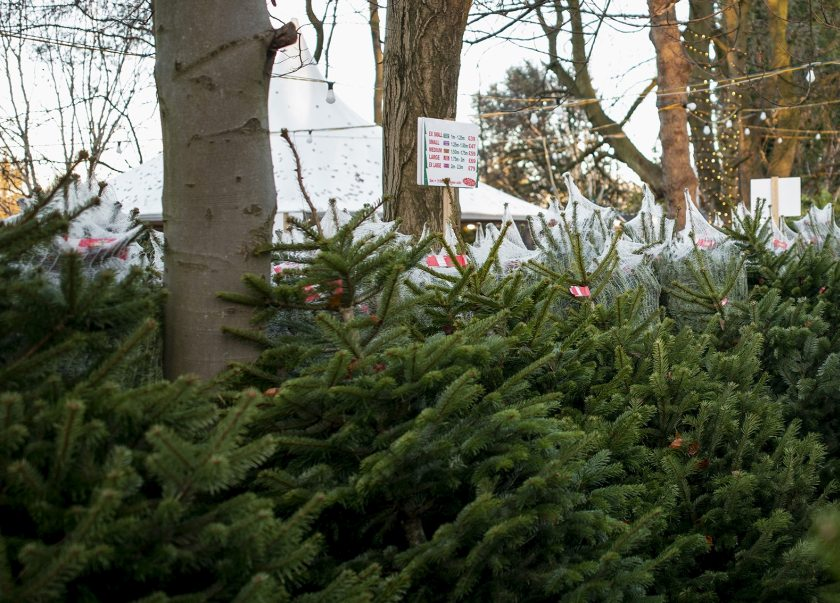 Growing Christmas trees can be a profitable use of land, United Utilities says