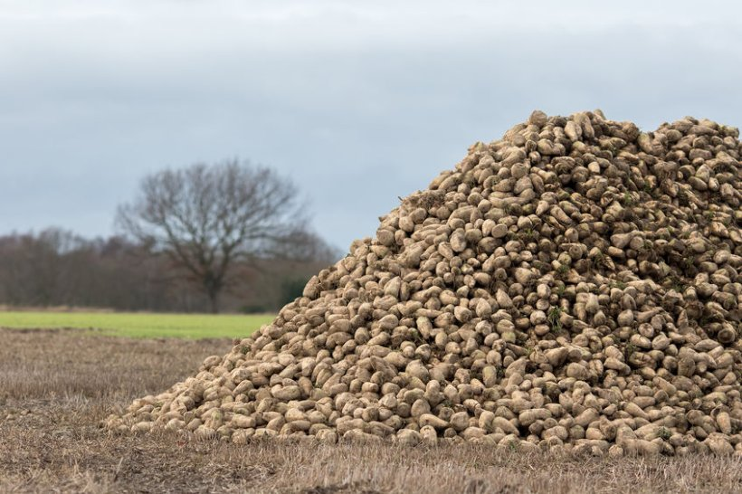 The pilot will allow growers and British Sugar to price beet independently of each other for the first time ever