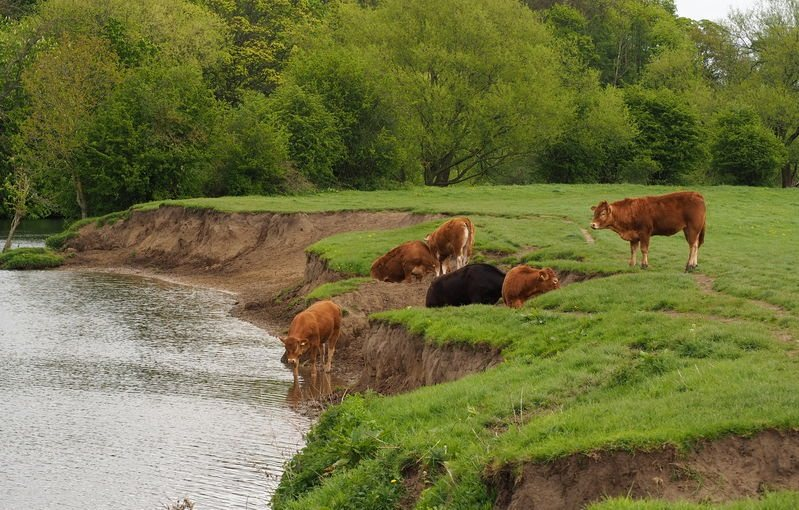 Unchecked livestock access to watercourses can lead to a breach of regulations and financial penalties