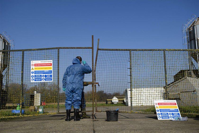 Avian influenza has been confirmed in a captive bird premises in Norfolk (Stock photo)