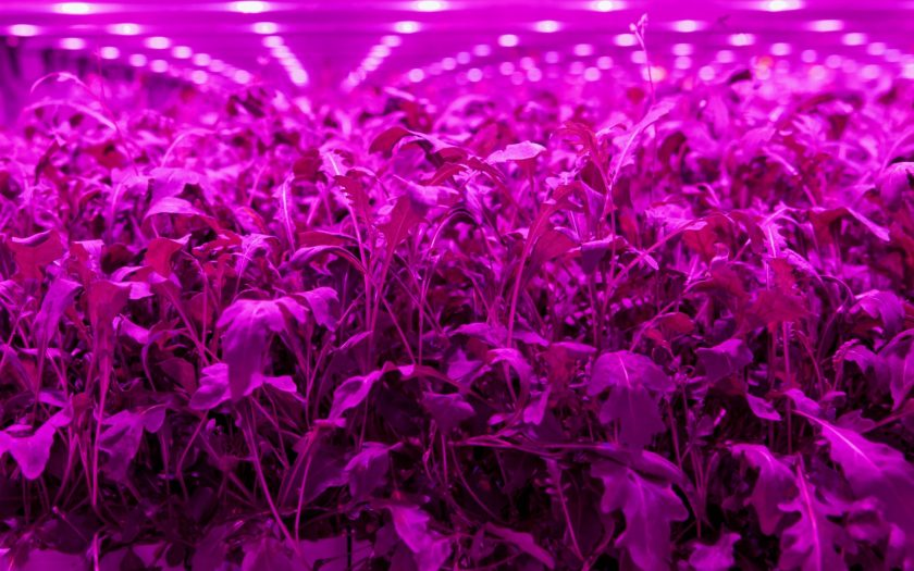 The 'all in one' indoor farm sensor will enable farms to monitor and control their environment