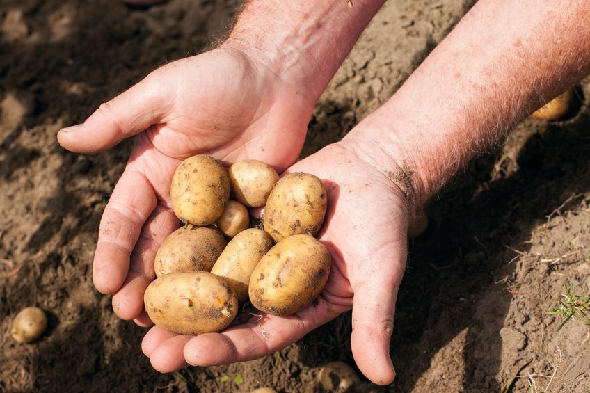 Vydate protects crops such as potatoes from nematode pests, a type of worm