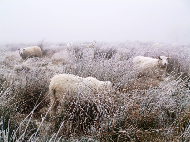 The Met Office had issued yellow weather warnings for snow and ice for much of the UK (Stock photo)