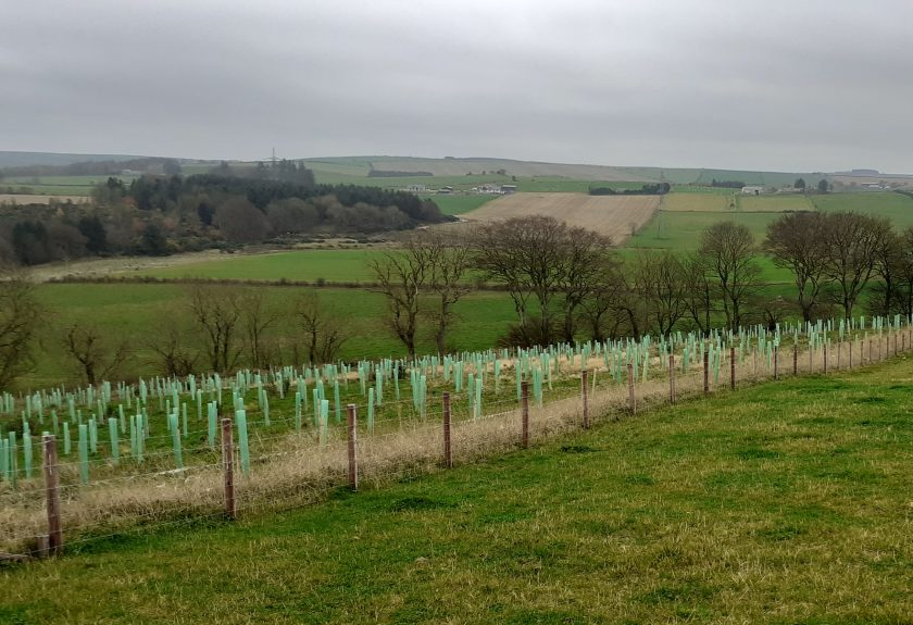 Planting trees has been linked to increased farming productivity