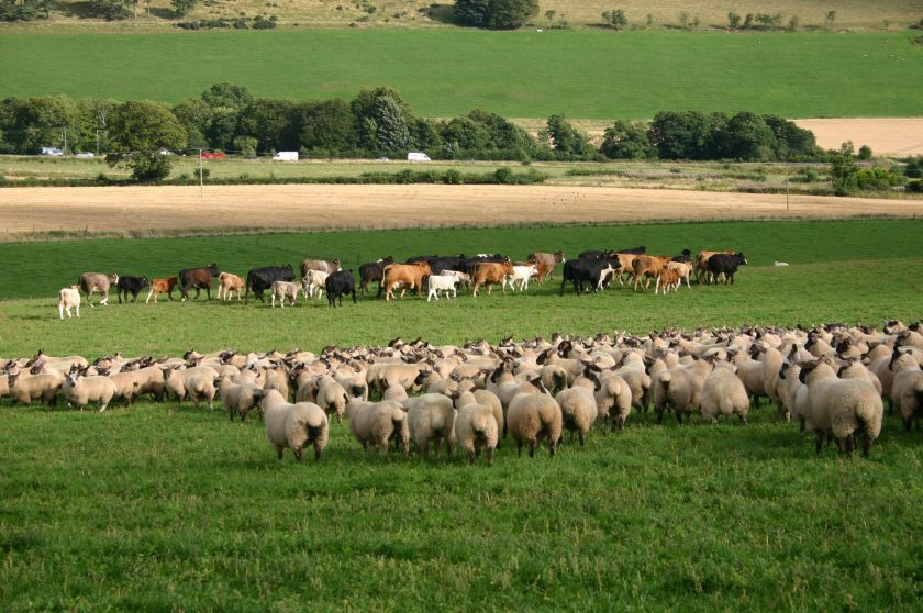 The new series will focus on how the Scottish livestock industry can remain profitable
