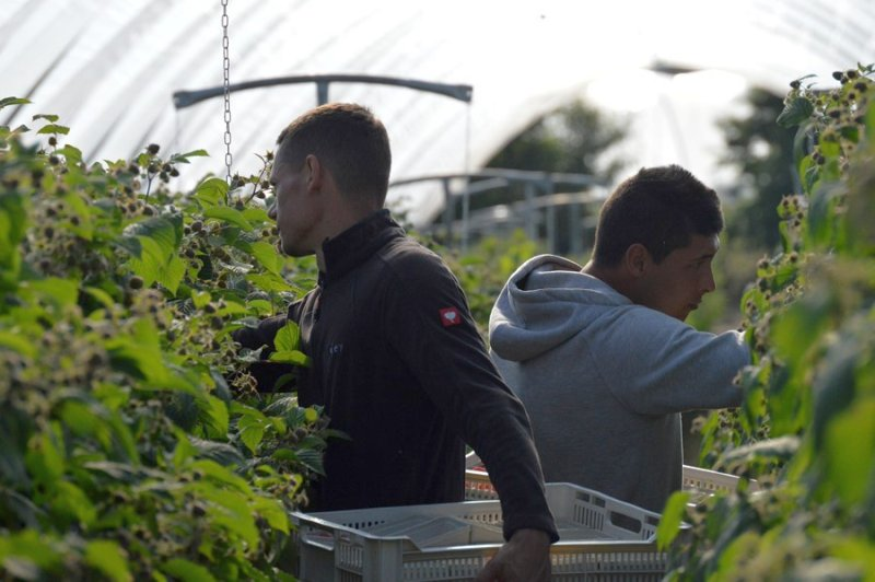 Farm workers will need to show a negative Covid-19 test on arrival, Defra has confirmed