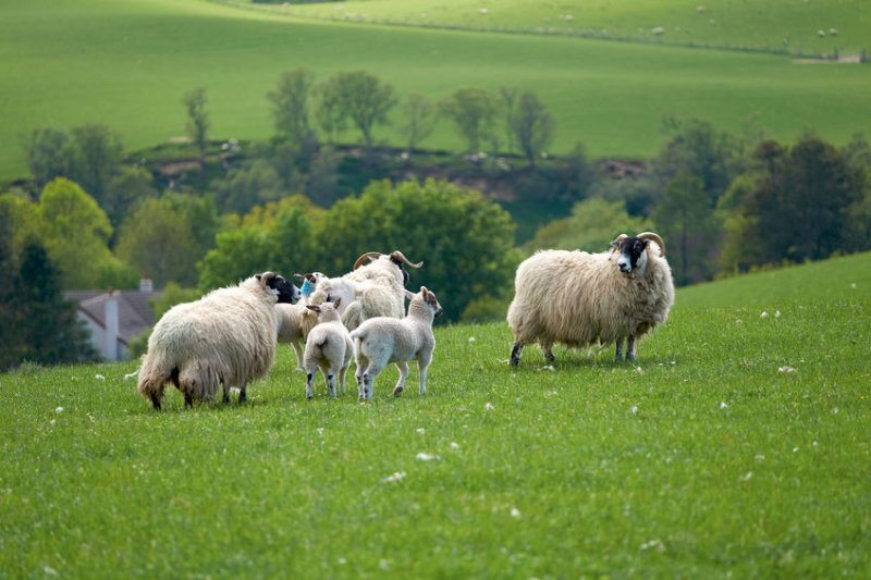 The funds have been sent to those who farm in marginal uplands, hill farms and island areas