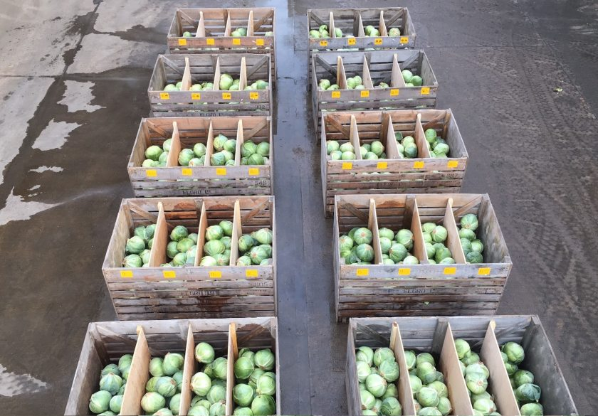 The annual value of cabbages lost in storage in the UK due to disease can be around £4.5m