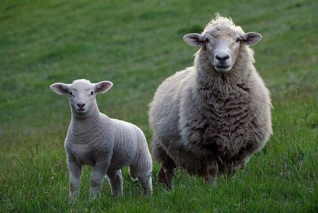 Plans to ban exports of live animals for slaughter were unveiled in December 2020