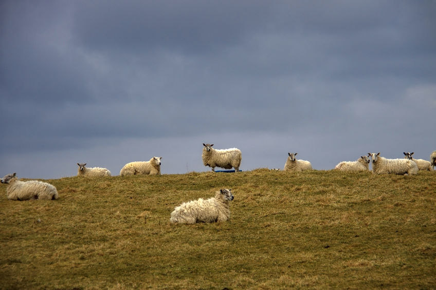 The 2020s will be a 'transformational decade' for Scotland's farmers and crofters