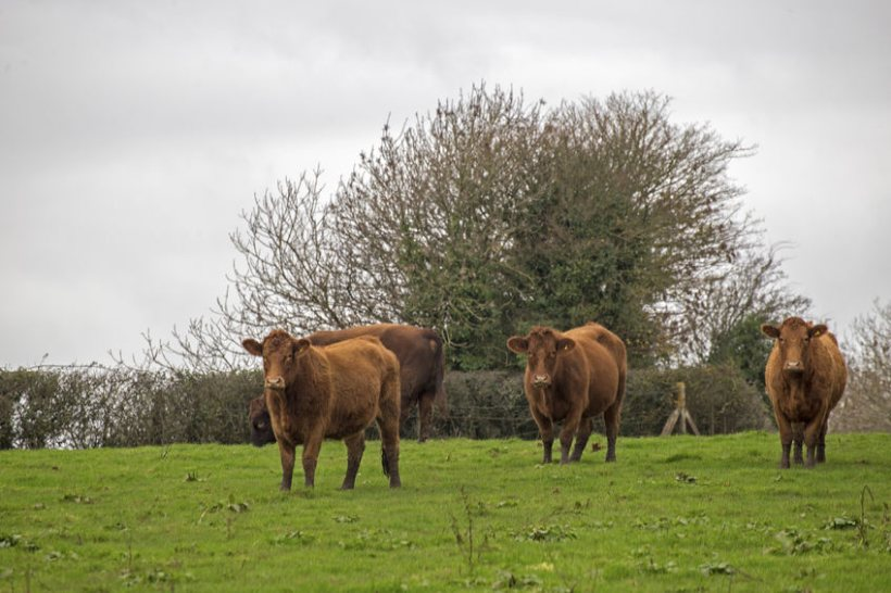The Bovine TB Partnership is made up of farmers, vets and conservation experts