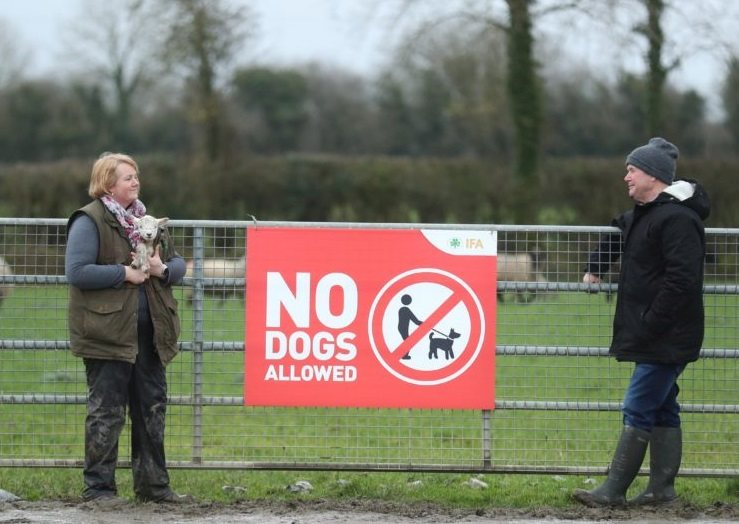 Ireland, like the UK, has seen a significant increase in attacks in recent months (Photo: Irish Farmers Association)