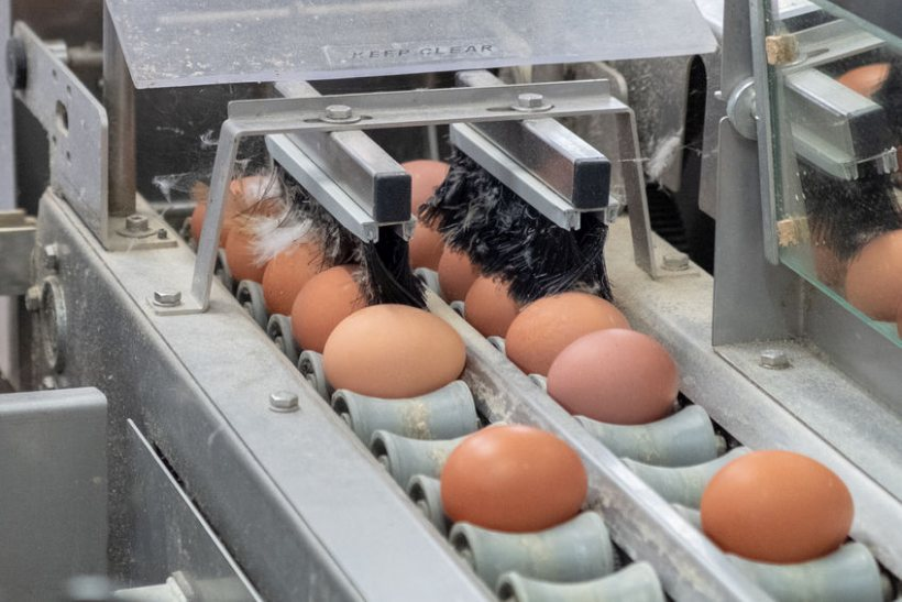 The NI government has announced a financial support package worth up to £2m for poultry farmers