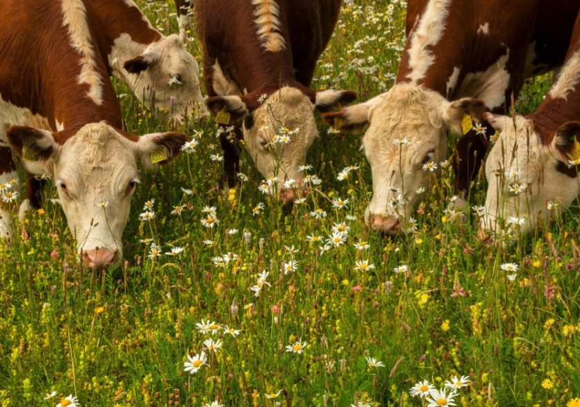 Certified farmers could make a nutritional claim when selling their beef following the study
