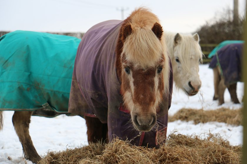 Yields from Redwings' own harvest are down 30% due to the extreme weather
