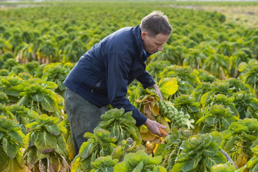 Waitrose says it wants to help tackle UK food poverty 'right from the farm'