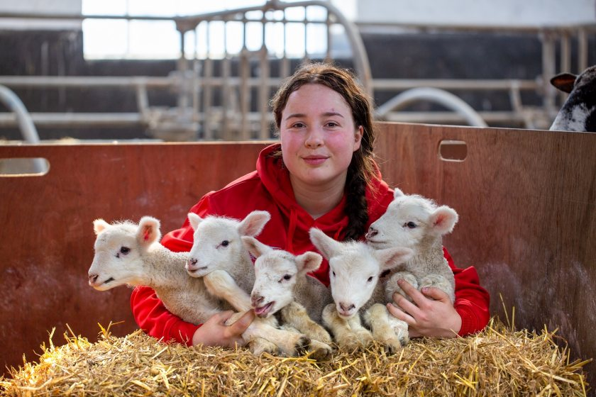 All five lambs weighed about 3.5kg each, Hartpury said
