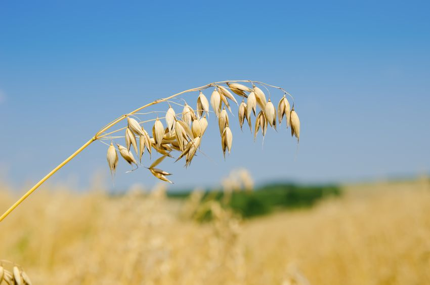 Some growers fear an imbalance between their production standards and those required of imports