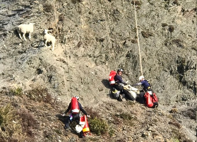 Rescuers abseiled down the cliff to access the sheep, before lowering them safely to a boat team below