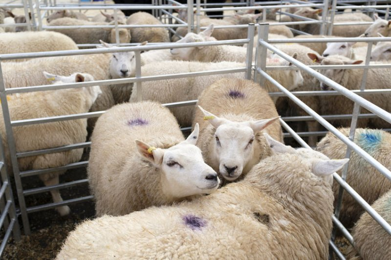 Farmgate prices for prime sheep have hit a seasonal record