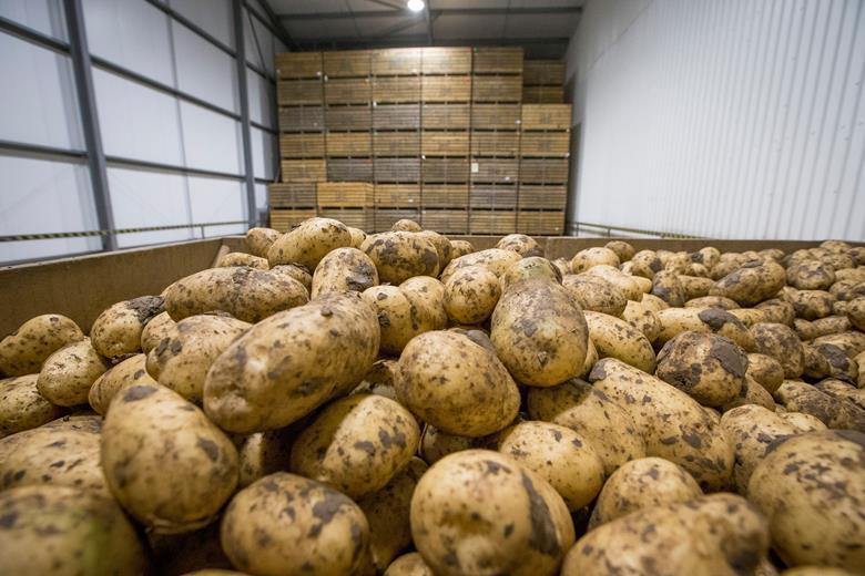 Coltivatori di patate scozzesi