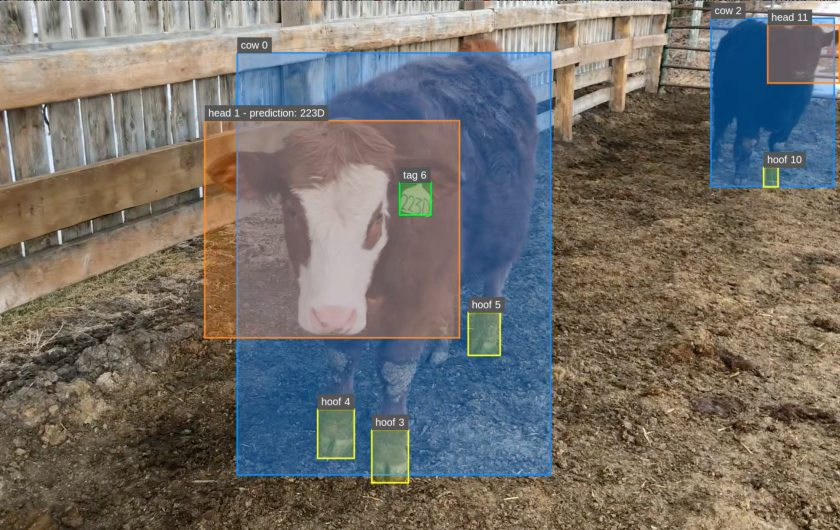 The highly computerised system identifies each animal and constantly tracks them