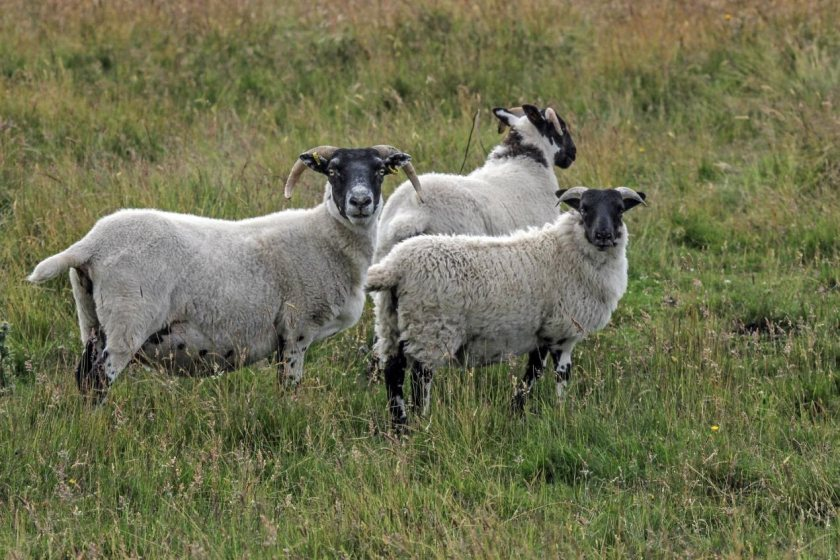 Farmers in the north east of Scotland are looking to increase profitability by actively scanning for OPA