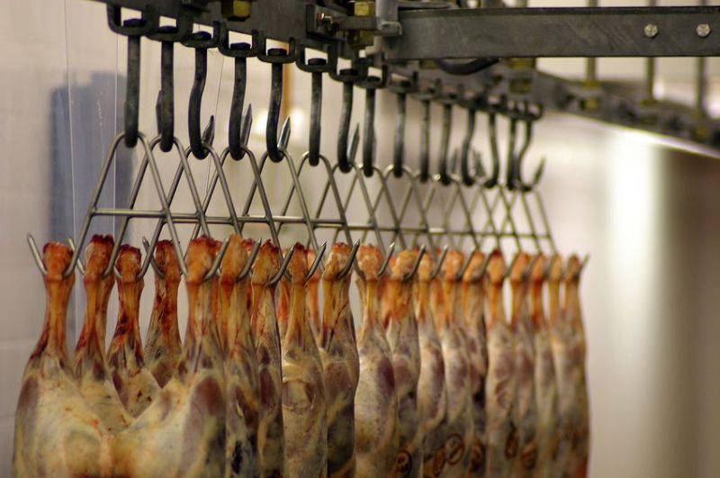 Over 86% of lamb carcases processed at Welsh abattoirs reached the top three specification grades in 2020