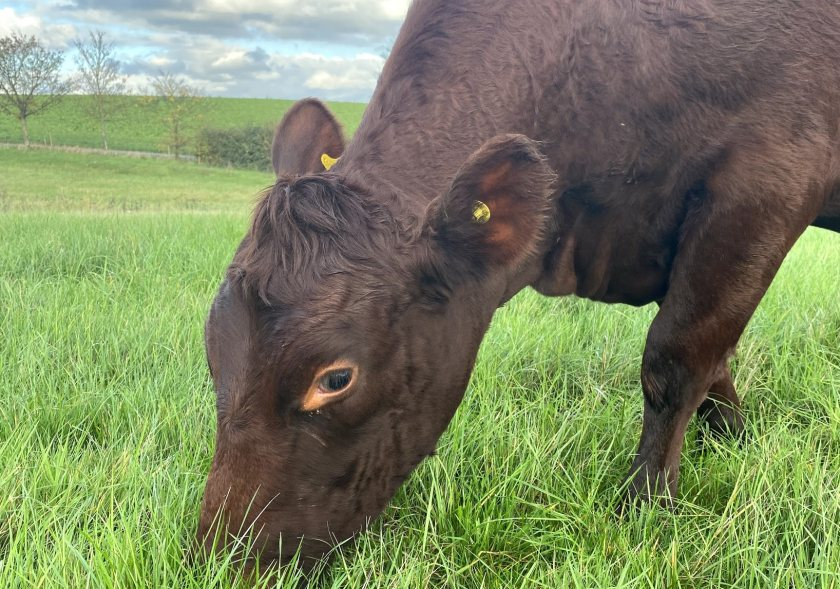 With his move to organic, George has begun grazing cattle