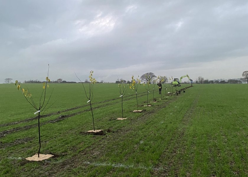 George has finished planting nearly seven thousand trees on his farm