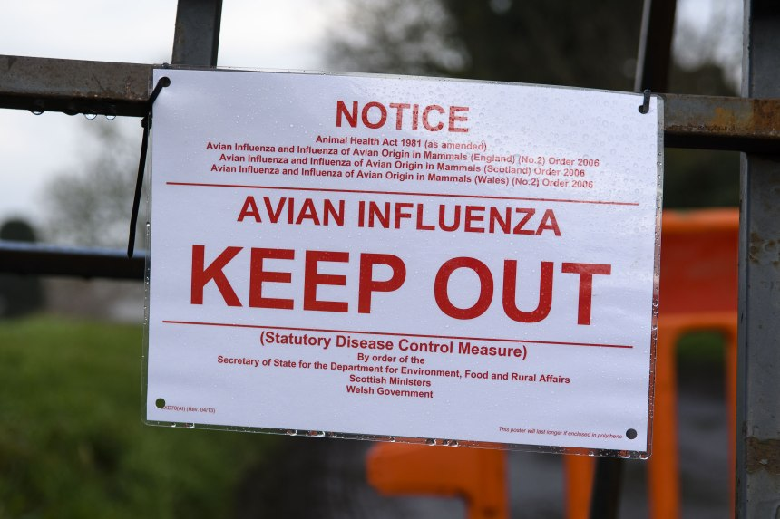 H5N8 avian influenza has been discovered in poultry in Staffordshire